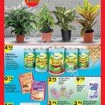 A101-5-Mart-2015-Aktüel-Ürünler-Kataloğu-canlı-çiçek-5